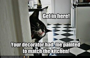 Your decorator had  me painted   to match the kitchen!