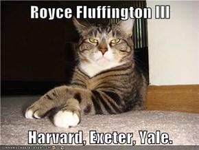 Royce Fluffington III  Harvard, Exeter, Yale.
