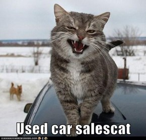 Used car salescat