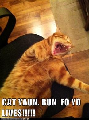 CAT YAUN. RUN  FO YO LIVES!!!!!