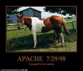 APACHE  7/29/98