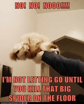 NO!  NO!  NOOO!!!!  I'M NOT LETTING GO UNTIL YOU KILL THAT BIG SPIDER ON THE FLOOR