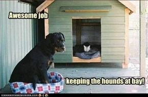 keeping the hounds at bay!