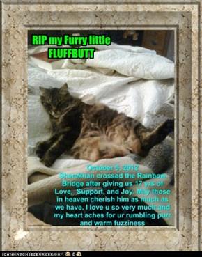 RIP my fuzzy BUDDY Sherekhan
