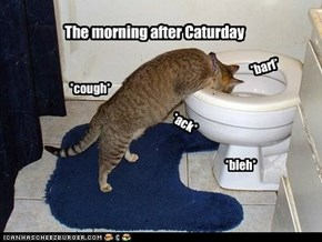 The morning after Caturday
