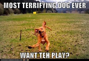 MOST TERRIFYING DOG EVER  WANT TEH PLAY?