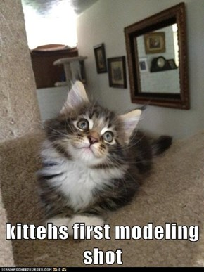 kittehs first modeling shot
