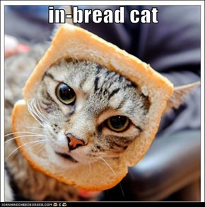 in-bread cat