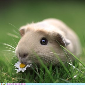 """I'm'a Squee on this daisy"""