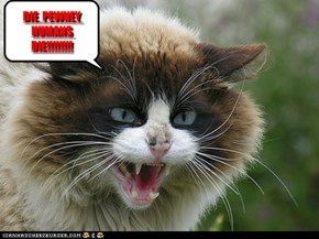 romney as a cat!