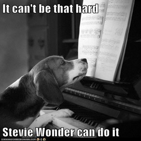 It can't be that hard  Stevie Wonder can do it