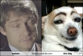 watson Totally Looks Like this dog