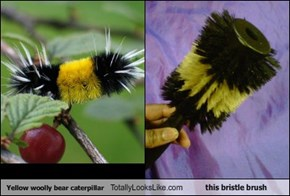 Yellow woolly bear caterpillar Totally Looks Like this bristle brush