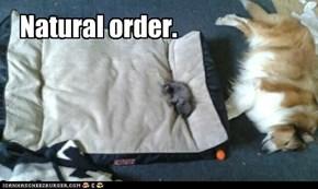 Natural order.