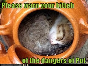 Please warn your kitteh  of the dangers of Pot.