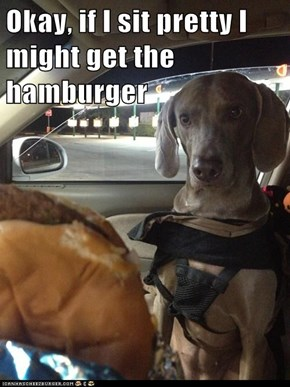 Okay, if I sit pretty I might get the hamburger