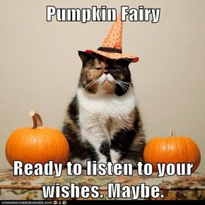 Pumpkin Fairy  Ready to listen to your wishes. Maybe.