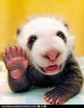 Hello everyones