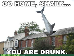 Go home, shark...
