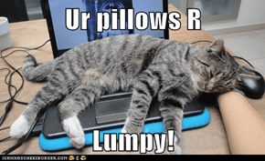 Ur pillows R  Lumpy!