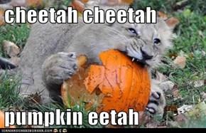cheetah cheetah  pumpkin eetah