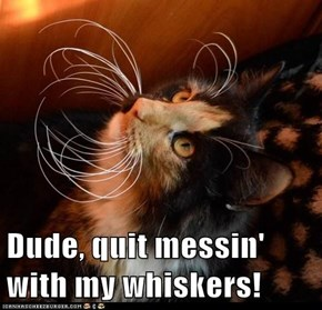 Dude, quit messin' with my whiskers!