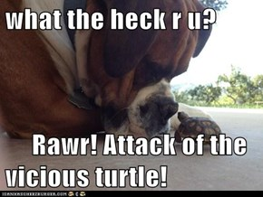 what the heck r u?       Rawr! Attack of the vicious turtle!