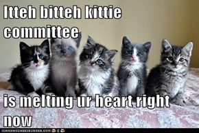 Itteh bitteh kittie committee  is melting ur heart right now