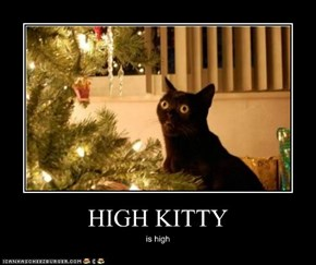 HIGH KITTY