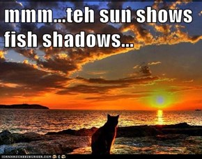 mmm...teh sun shows fish shadows...
