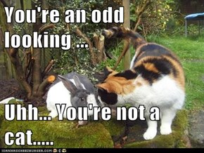 You're an odd looking ...  Uhh... You're not a cat.....