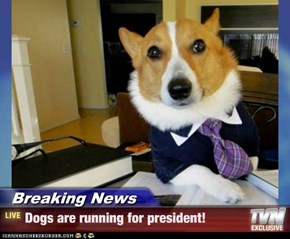 Breaking News - Dogs are running for president!