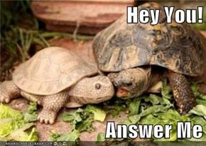 Hey You!  Answer Me