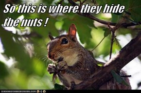 So this is where they hide the nuts !