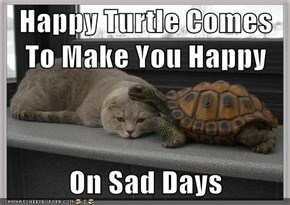 Happy Turtle Comes To Make You Happy  On Sad Days
