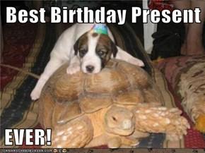 Best Birthday Present  EVER!
