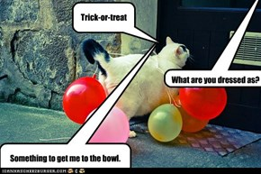 Cats trick-or-treat with balloons