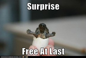 Surprise   Free At Last