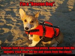 "I'm a ""Rescue Dog""."
