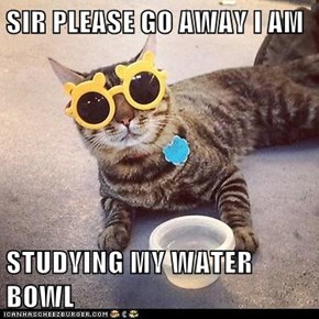 SIR PLEASE GO AWAY I AM  STUDYING MY WATER BOWL