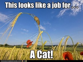 Cats are a farmer's best friend.