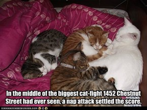 In the middle of the biggest cat-fight 1452 Chestnut Street had ever seen, a nap attack settled the score.