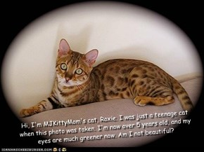 Hi, I'm MJKittyMom's cat, Roxie. I was just a teenage cat when this photo was taken. I'm now over 5 years old, and my eyes are much greener now. Am I not beautiful?