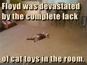 Floyd was devastated by the complete lack  of cat toys in the room.