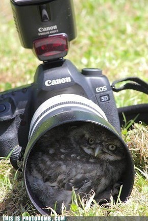 Nesting Place Bomb