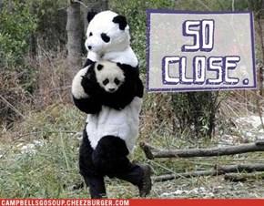 Panda-mom-ium?