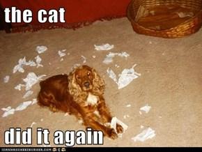 the cat  did it again