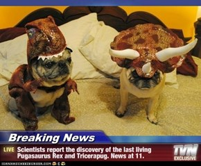 Breaking News - Scientists report the discovery of the last living Pugasaurus Rex and Tricerapug. News at 11.