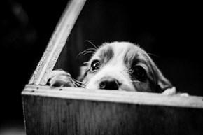 Cyoot Puppy ob teh Day: Peek-a-boo!