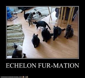 ECHELON FUR-MATION